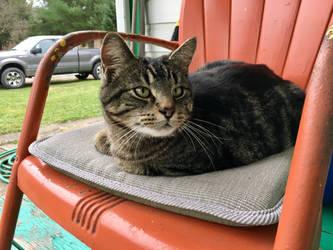 Porch Cat by Halfshadows6