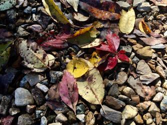 Autumn by Halfshadows6