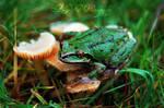 New Mushroom King by AloriaTheZombie