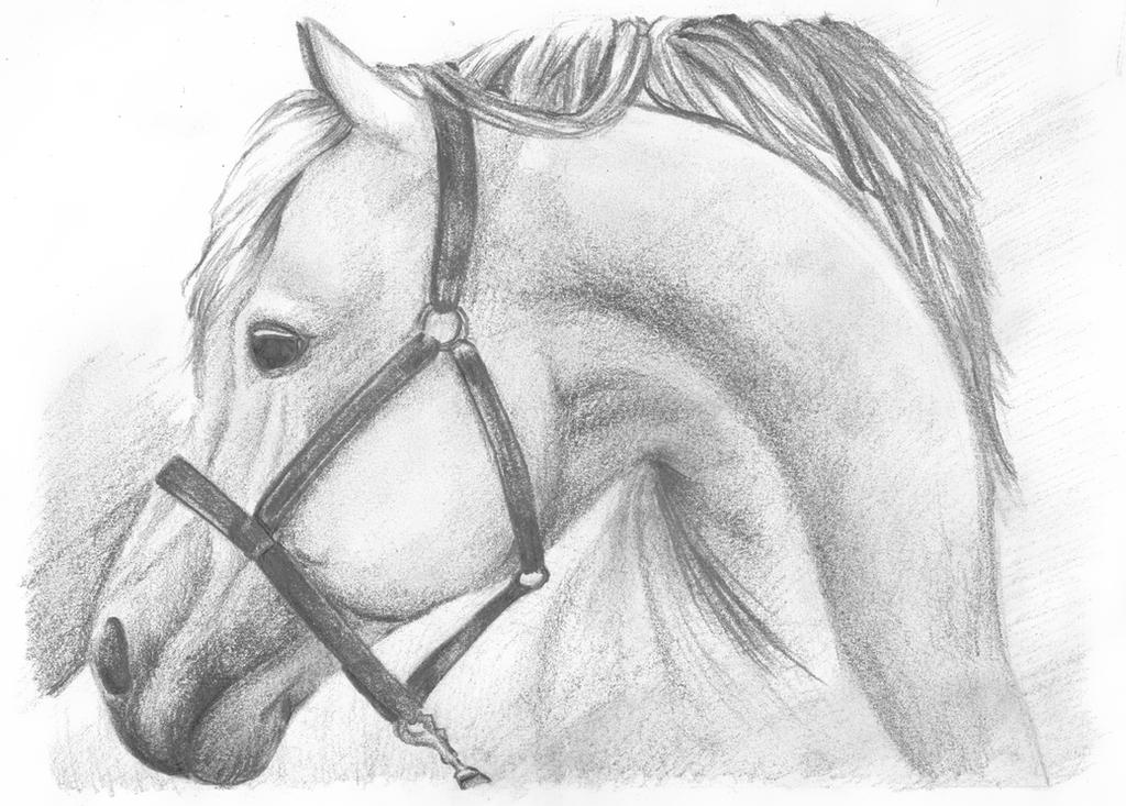 http://fc00.deviantart.net/fs71/i/2013/156/c/d/horse_by_natzyr-d67xolq.png