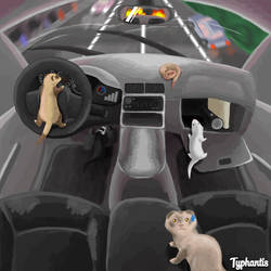 Why ferrets dont drive by Typhantis