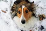 The Puppy Dog Eye's