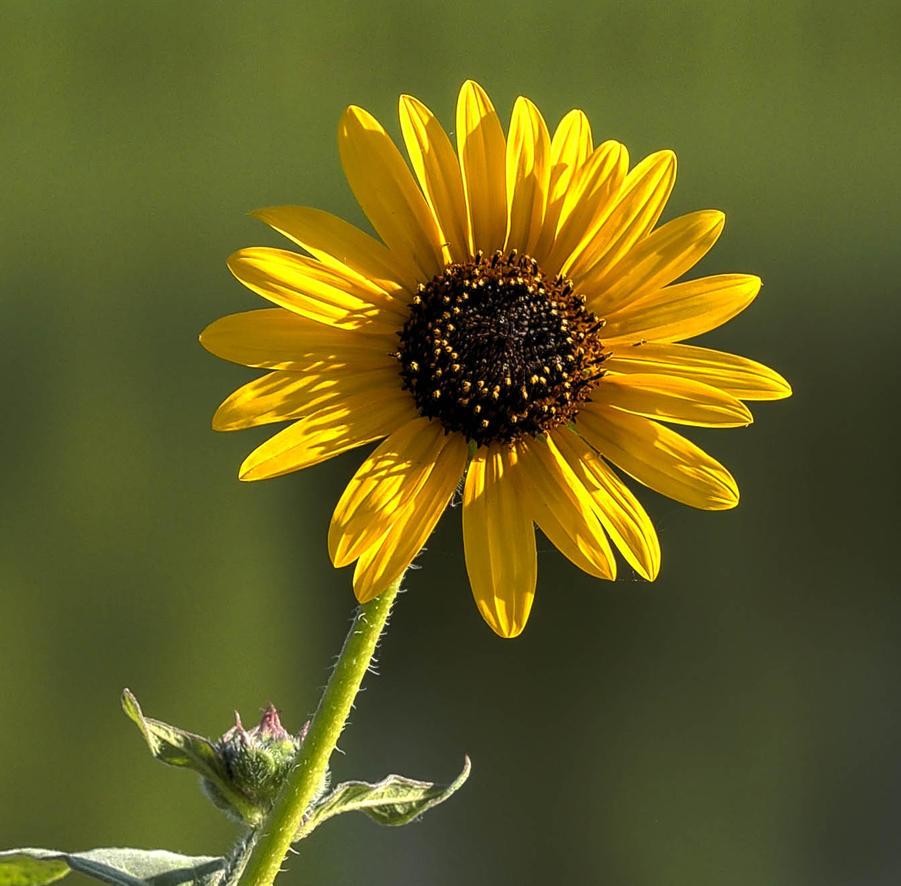 Happy Flower by lidarman