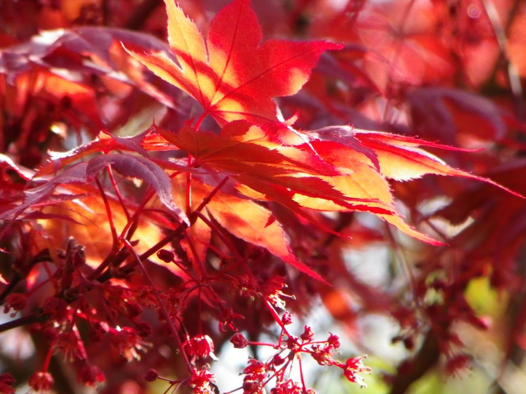 Red by Jen-kun
