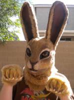 Jack Rabbit by Enoki