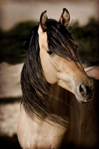 Spirit Mustang