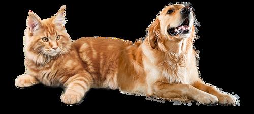 Catdog (realistic version)