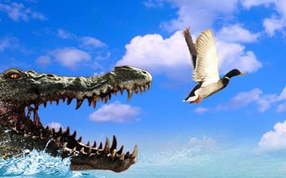 a huge saltwater crocodile chasing a mallard