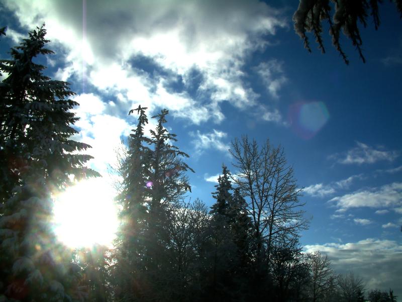 sunlight through trees black - photo #26