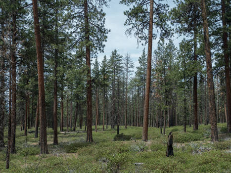 Sparse Forest
