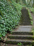 Stairs into the Forest