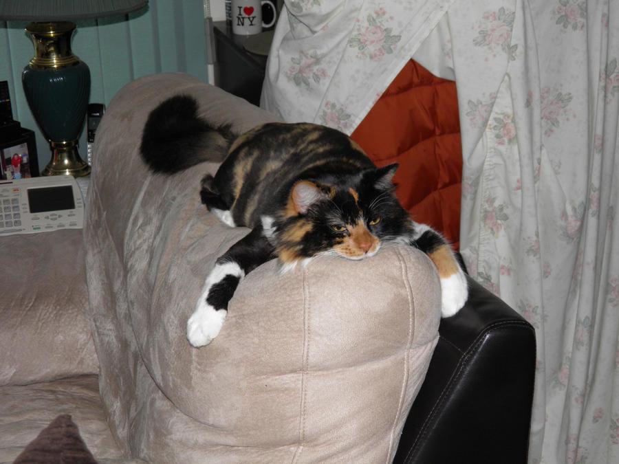 Chloe: Comfortable Anywhere by SunsetRevelation