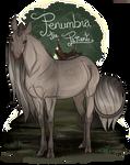 Lady Penumbra | Doe | Royal