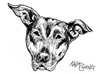 Pudge the Dog