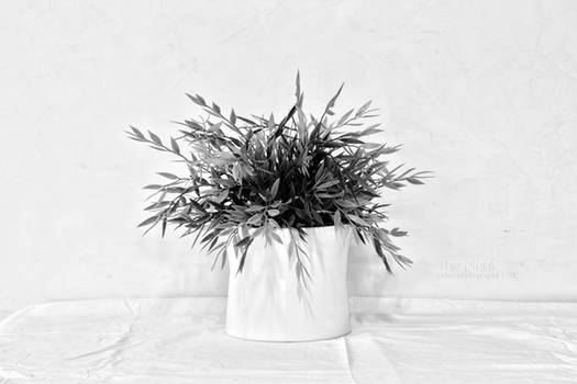 The Plant - Monochrome