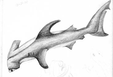 Hammerhead shark drawning by southparkcharcters