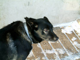 Dog ears back 2 by Babybird-Stock