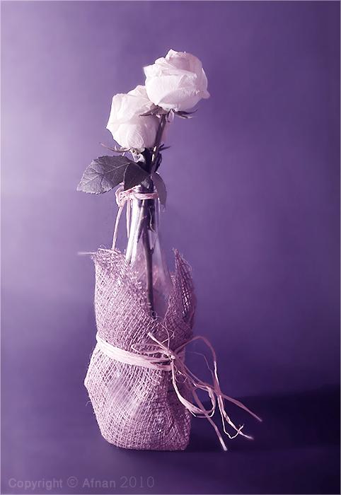 Purple by Fannooo