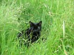In The Cat Meadow