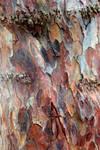 Old Yew Bark Stock Texture