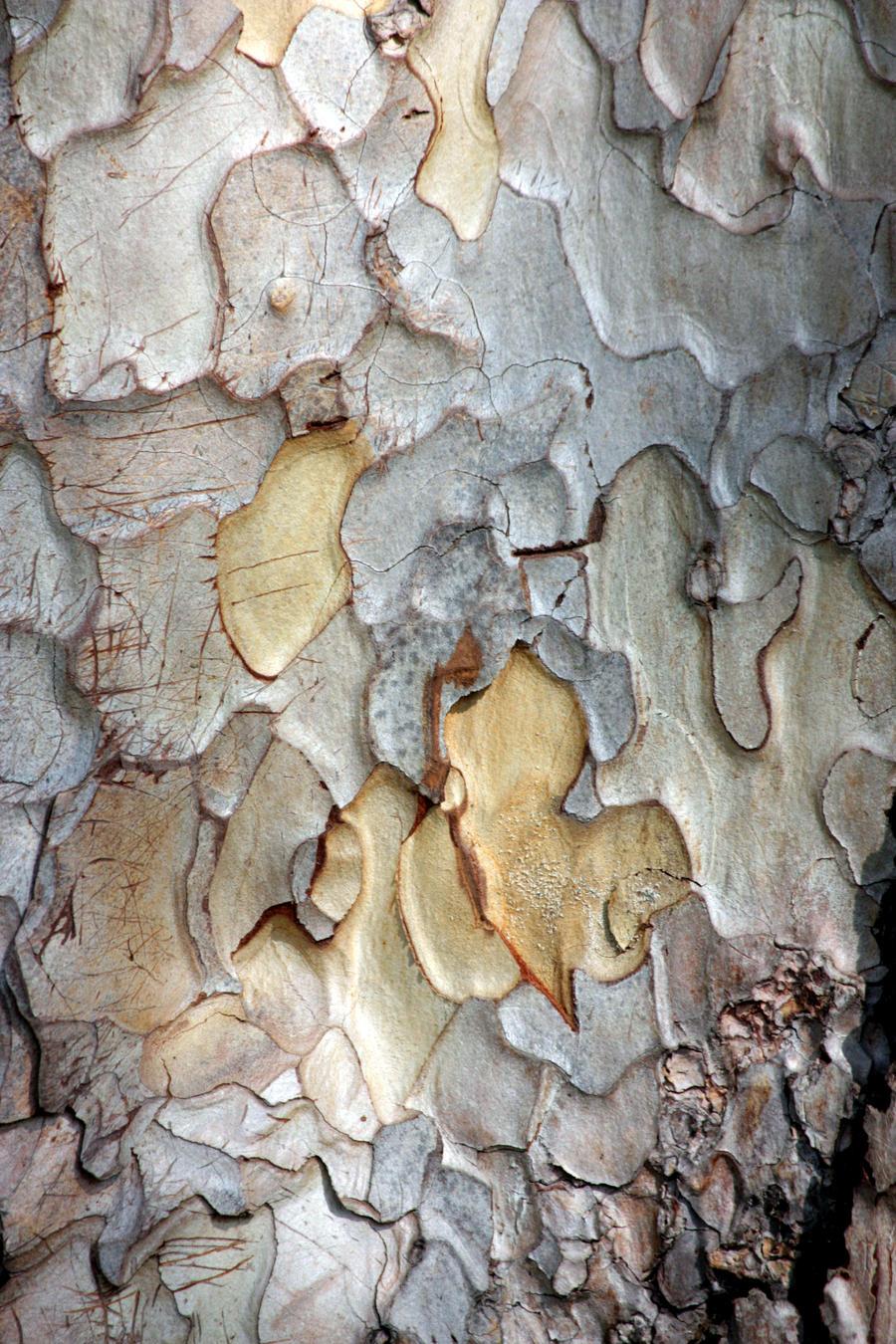 Pine Bark Pattern Stock