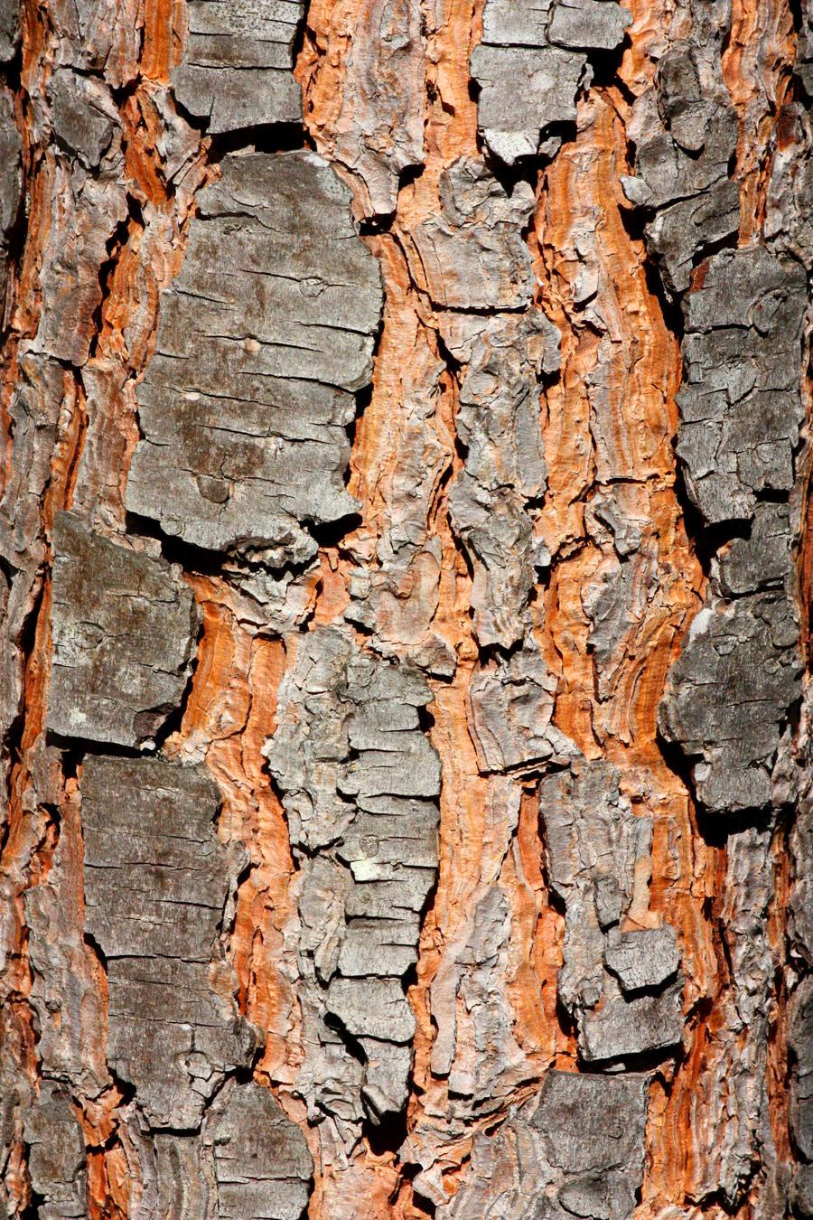 Stone Pine Bark Texture Stock