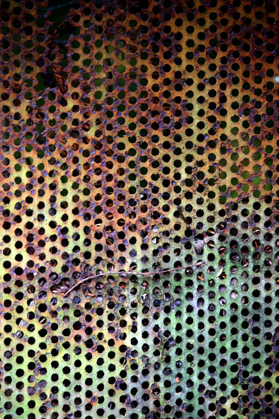 Rusty Perforated Sheet Metal