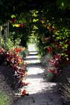 Path Through Lavender And Vine