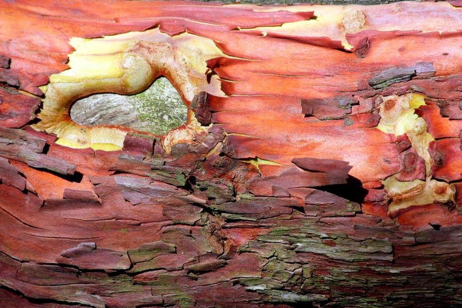 Exotic Bark Texture Stock