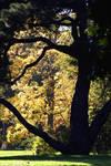 Kew Autumn View