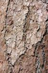 Larch Bark Stock Texture