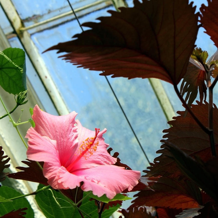 The Hibiscus House Bed And Breakfast