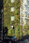 The Hanging Gardens Of Picadilly