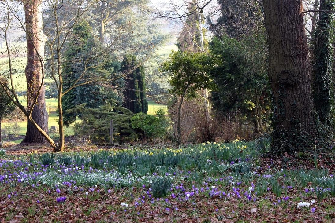 Early Spring In The Heathfield Woodland Garden By Aegiandyad On