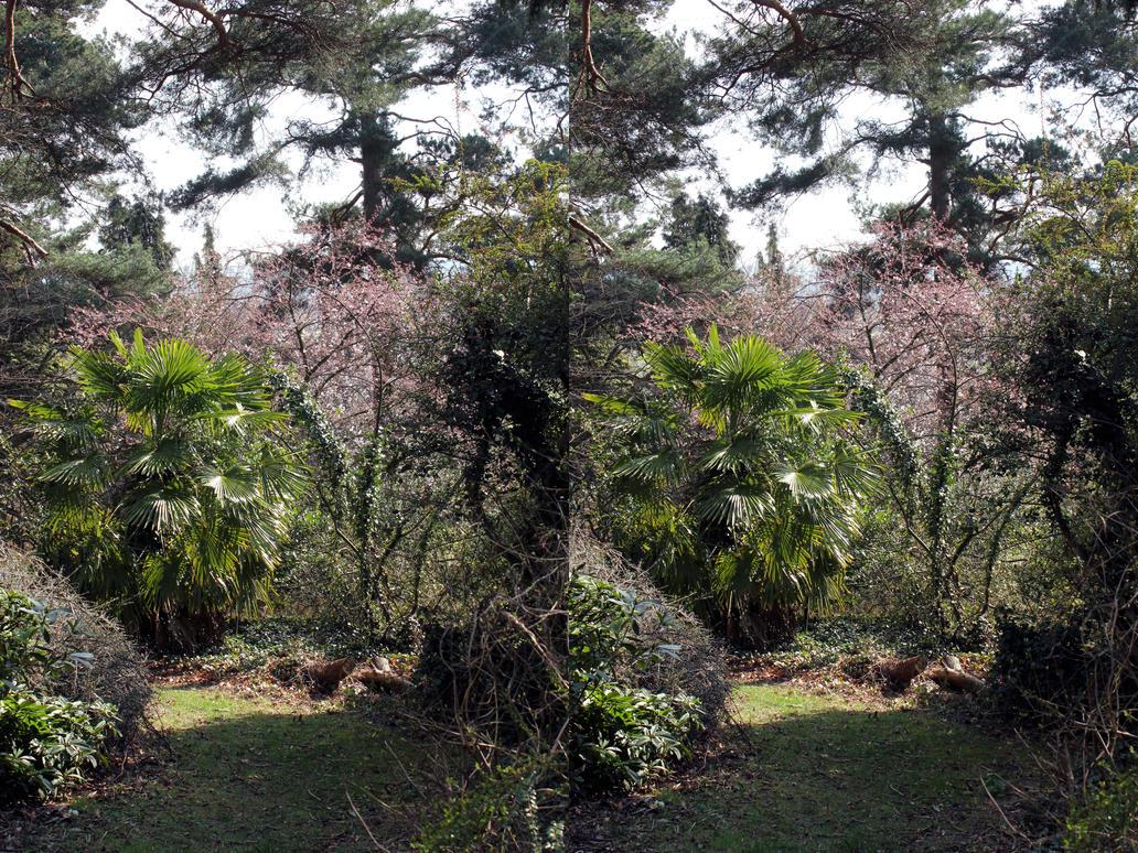 Palm Tree In Heathfields Woodland Garden By Aegiandyad On