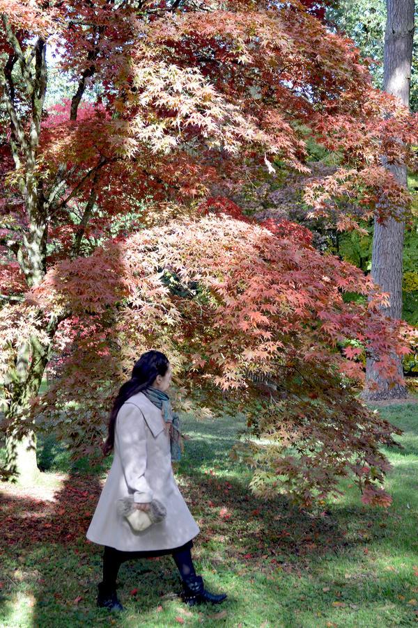 Walking Through Westonbirt Arboretum In Autumn by aegiandyad