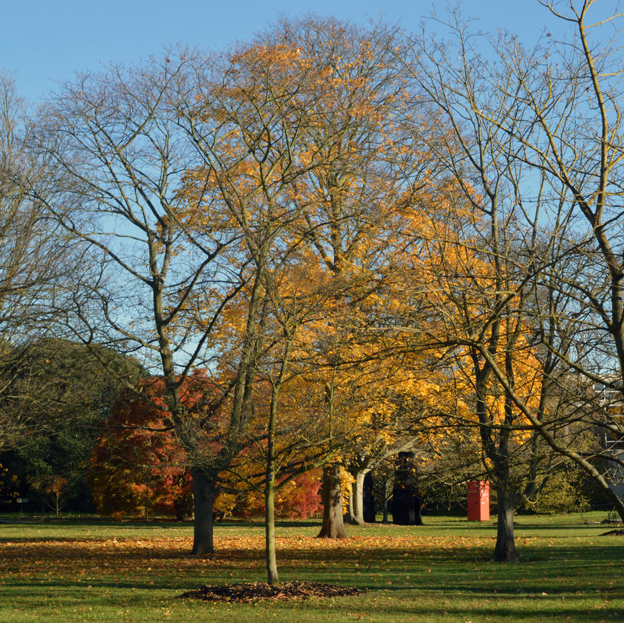 The Maple Section Of Kew Gardens In Mid November by aegiandyad