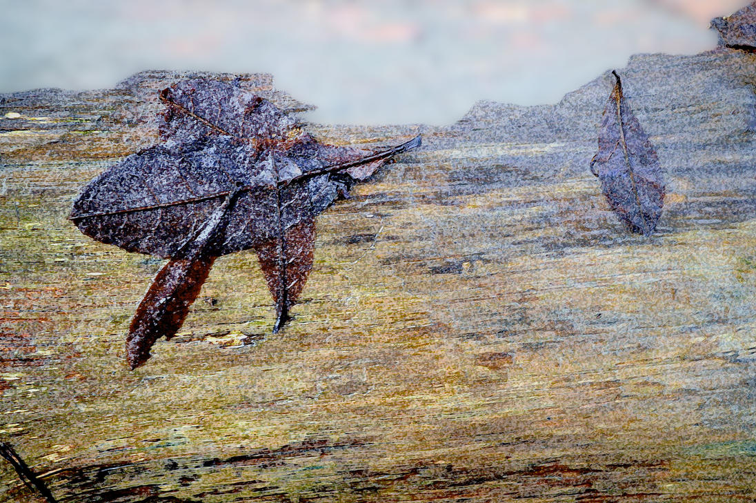 Winter Leaf Fantasy Creature In A Wooden Landscape by aegiandyad