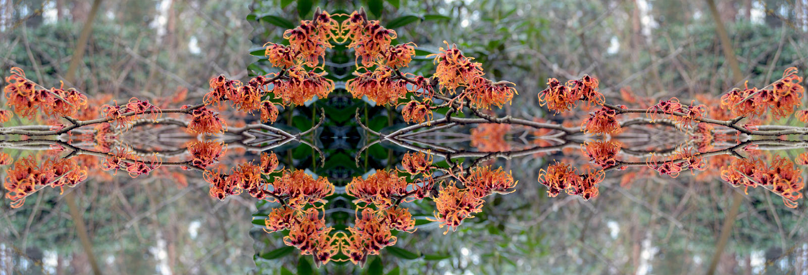 The Reflected Manipulated Witch Hazel Stock by aegiandyad