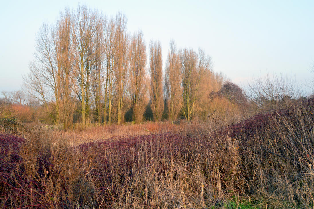 South Norwood Country Park Manicured Wilderness by aegiandyad