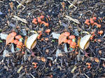 Stereoscopic Mushrooms Under A Tree In Kew Gardens