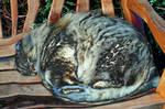 Kelsey Park Spherical Cat Melt