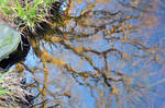 Lily Pond Oak Tree Painting