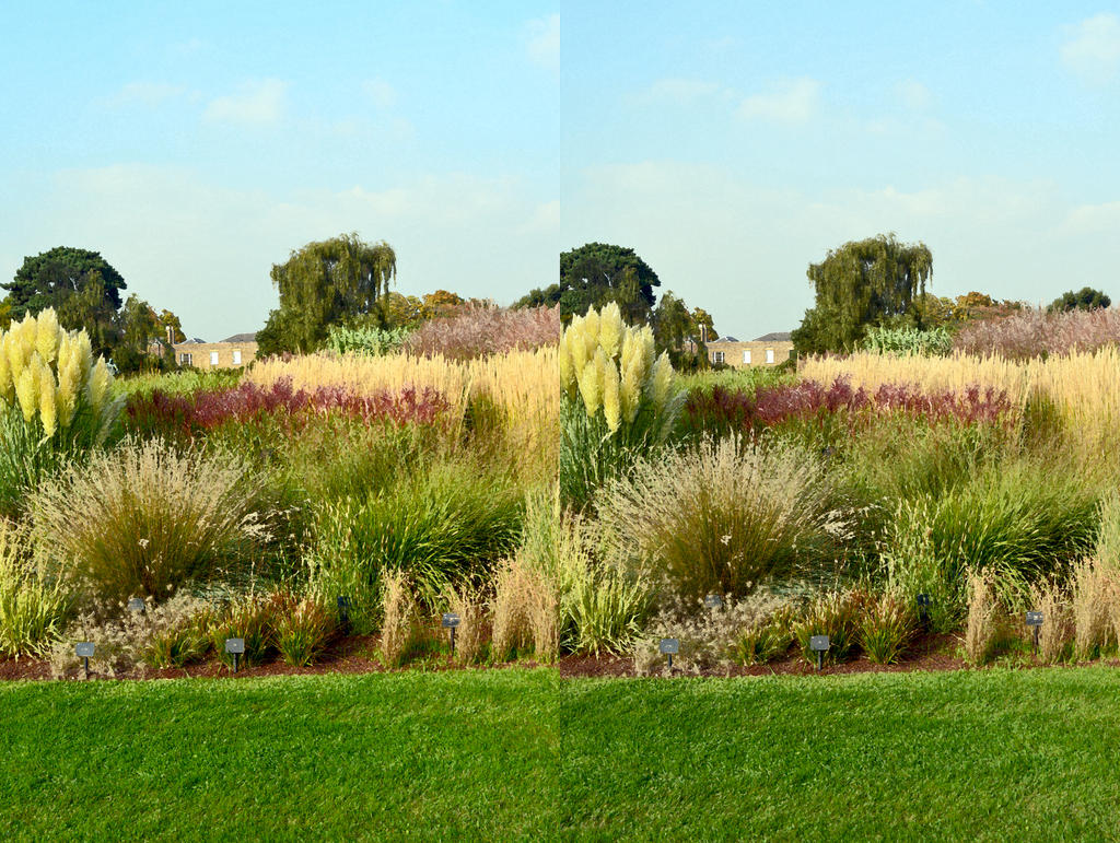 Ornamental Grass Bed At Kew Dry Brush Stereo By Aegiandyad