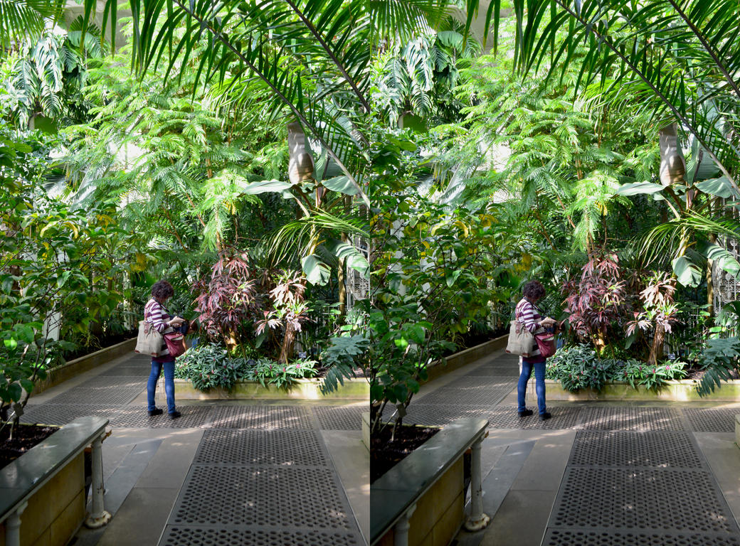 Snap Shot Stereography In Kew Gardens Palm House by aegiandyad