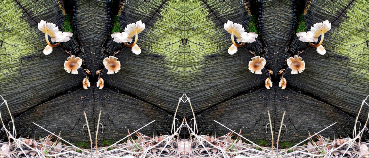 Mycoroft Shrooms In the Deadlogenese Club by aegiandyad