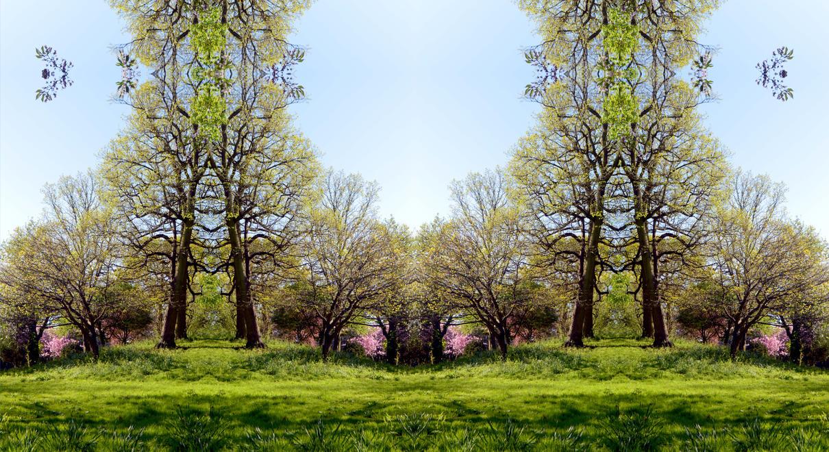 Park Hill Spring Glider Gun Tree by aegiandyad