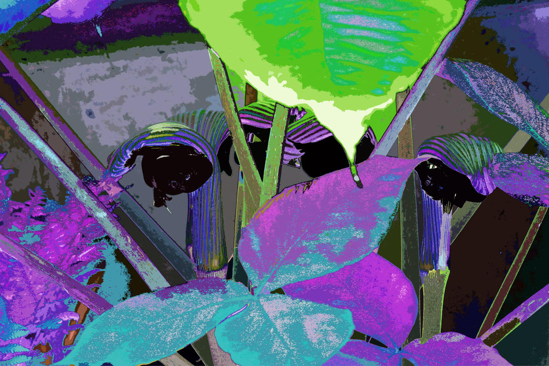 Bulls Eye, Bubble Gun and Humbug Floral Quintet by aegiandyad