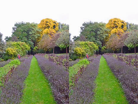 The Lavender Beds Of South Croydon In 3-D