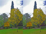 'Rocket' Cypress Stereoscopic Pair Painting